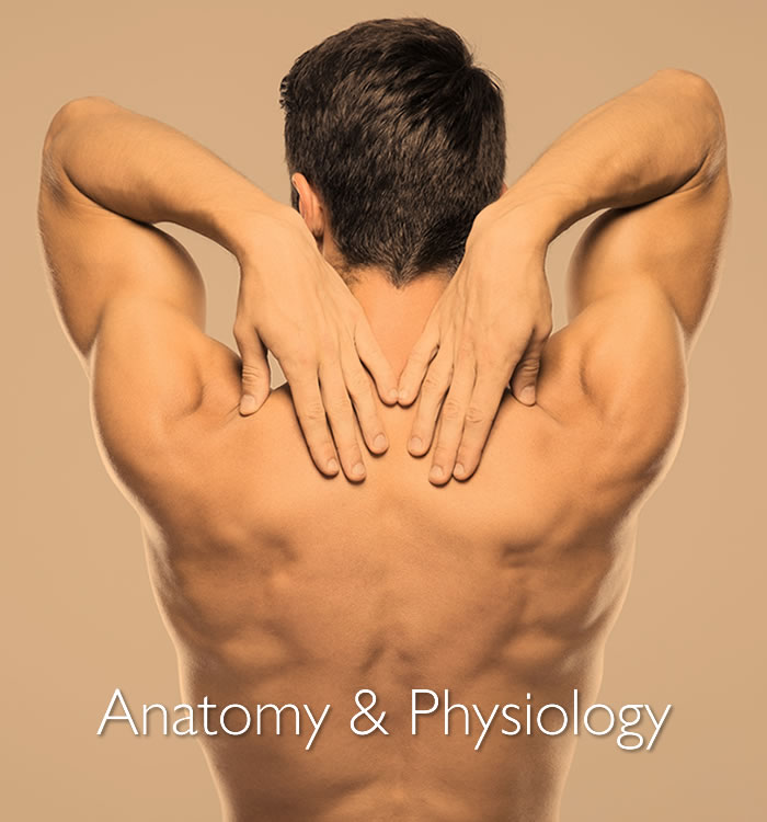 Learn Anatomy and Physiology